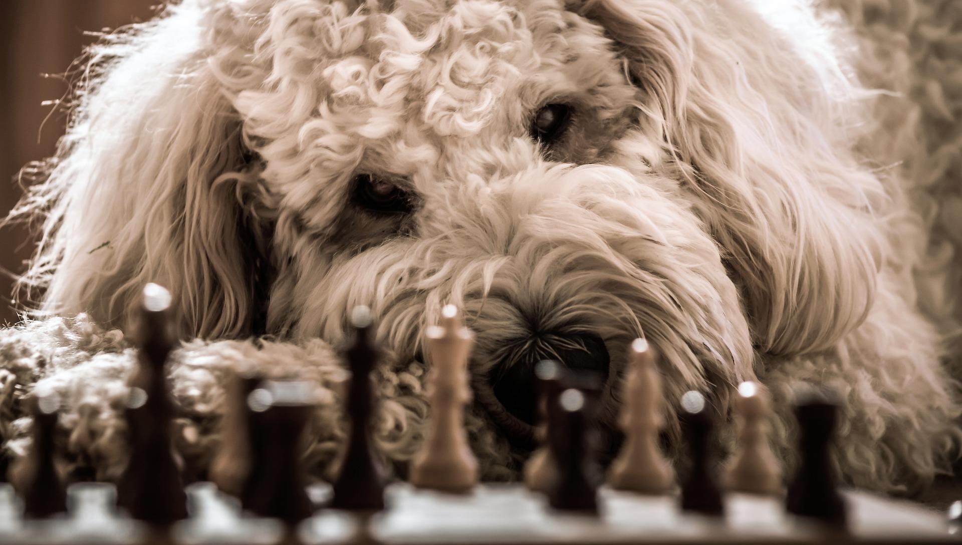 Schach - jeder kann es lernen